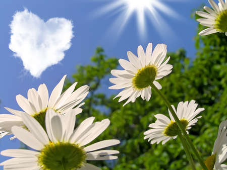 Daisies and a cloud in the shape of a heart      photo