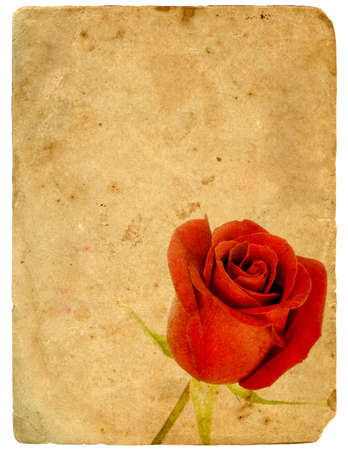 Red Rose. Old postcard. Isolated on white background photo