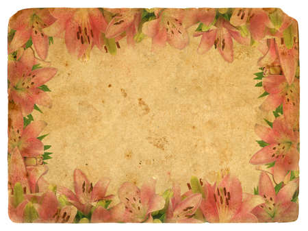 Frame of pink lilies. Old postcard. Isolated on white background photo