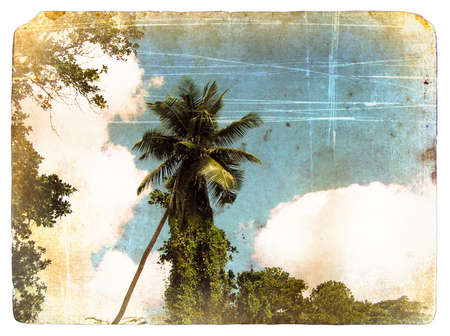 Coconut palm tree, sky, clouds. Old postcard. Isolated on white background photo