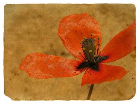red Poppy. Old postcard, design in grunge and retro style