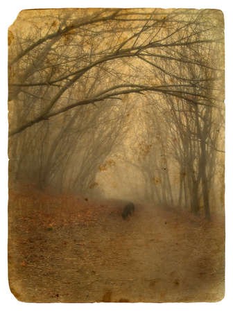 Foggy landscape. Old postcard, design in grunge and retro style photo