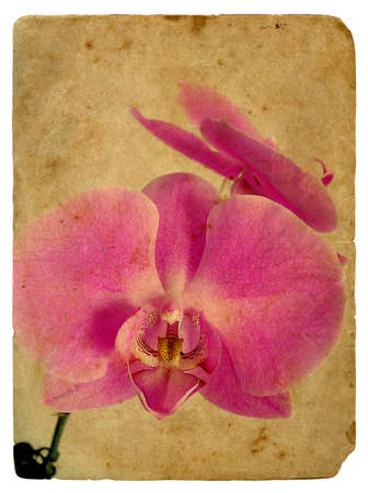 pink orchid. Old postcard, design in grunge and retro style photo