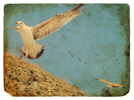 Seagull. Old postcard, design in grunge and retro style photo