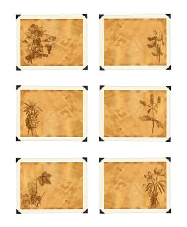 frayed: A collection of old paper with plants in vintage style graphics. On a white background
