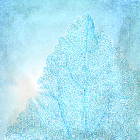 Blue background with a textured leaf  Page to design photo books photo