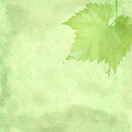 Green background image for the photo album, photo book with a grape leaf Stock Photo - 12907800