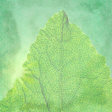Green background with a texture leaf. Page to design photo books photo