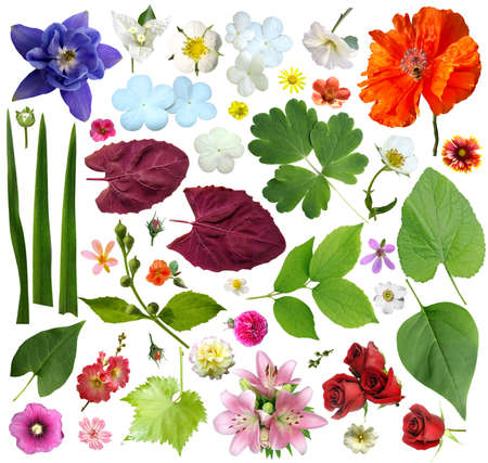 Set of plant elements - flowers and leaves. On a white background photo