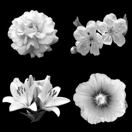 collage of black and white flowers rose, cherry, lily and hibiscus isolated on a black background Banque d'images