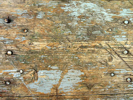 Wood texture with nails and remains of cracked paint.  Very old tree