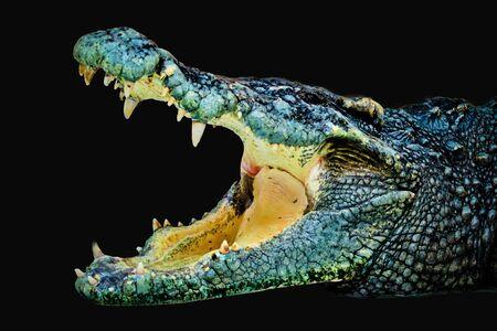crocodile isolated on black background