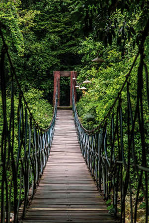 Hanging bridge over top of tree inside evergreen tropical forest surrounded by green tree.