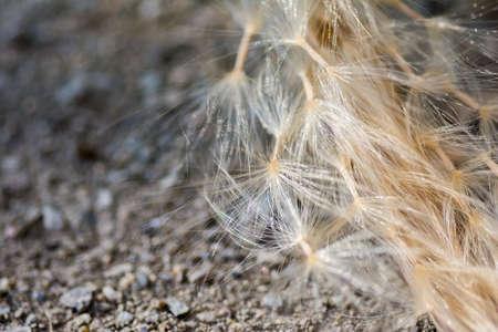 spore: closeup fluffy spore
