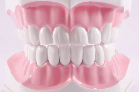 tooth model Reklamní fotografie