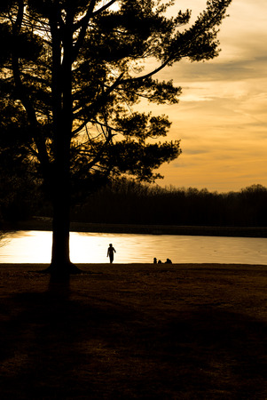 silhouette of pine tree with people underneath by the frozen lake at dusk photo