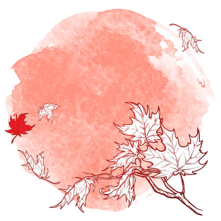 stripping: Wind stripping leaves off the Maple branch. Desaturated Red grunge spot background. Autumn mood. Hand drawn sketch. Stock Photo