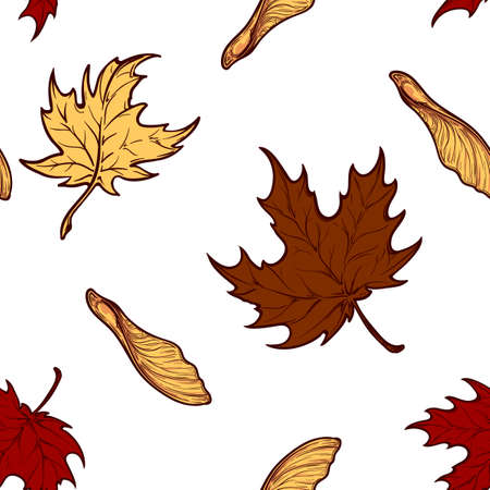 Autumn maple leaves and seeds. Detailed intricate hand drawing. Isolated on white background. Chaotic distribution of elements. Seampless pattern. EPS10 vector illustration.