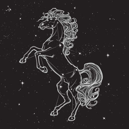 hind: Rearing horse with curly tail and mane. Star constellation of Horse stood up on its hind legs. White sketch on black nightsky background with stars. EPS10 vector illustration. Illustration