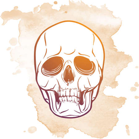 ironic: Hipster style human skull. Hand drawn sketch on a watercolor spot. Vintage design. Halloween concept art. EPS10 vector illustration.