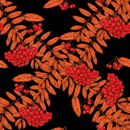 rowanberry: Autumn rowanberry leaves and berries. Detailed intricate hand drawing. Chaotic distribution of elements. Red on black seamless pattern. EPS10 vector illustration. Illustration