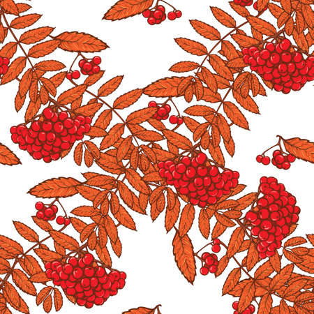 rowanberry: Autumn rowanberry leaves and berries. Detailed intricate hand drawing. Chaotic distribution of elements. Red on white seamless pattern. EPS10 vector illustration.