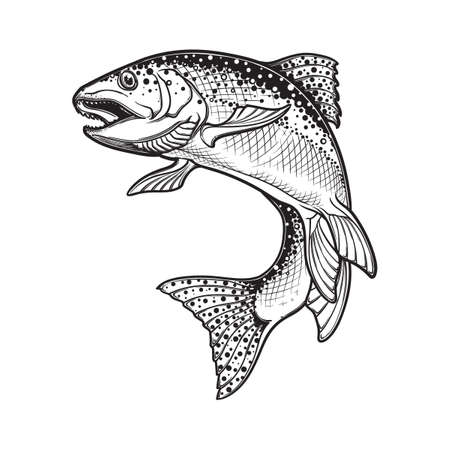 Realistic intricate drawing of the rainbow trout jumping out. Black and white sketch isolated on white background. Concept art for horoscope, tattoo or colouring book. EPS10 vector illustration Фото со стока