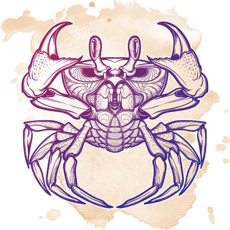 Cancer. Accurate symmetrical drawing of the beach crab.