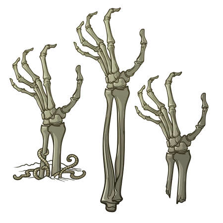 Pair of zombies hands rising from the ground and torn apart. Lifelike depiction of the rotting flash with ragged skin, protruding bones and cracked nails. Conceptual art. EPS10 vector illustration Illustration