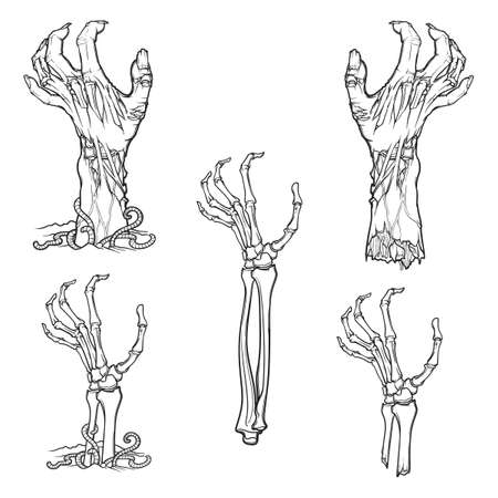 Set of lifelike depicted rotting zombie hands and skeleton hands rising from under the ground and torn apart. Linear drawing isolated on white background.