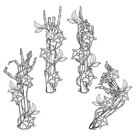 .Set of skeleton hands with various gestures decorated with dog-rose garlands. Colored linear drawing isolated on white background. EPS10 vector illustration