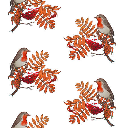Christmas seamless pattern. Robin bird sitting on a snow covered rowanberry brunch. Vector drawing isolated on white background. EPS10 vector illustration