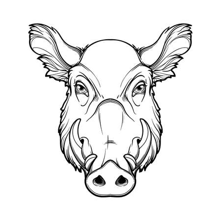 Fanged wild boars head. Mascot of the New Year 2019 according to Chinese zodiac calendar. Linear black drawing isolated on white background. EPS10 vector illustration Illustration