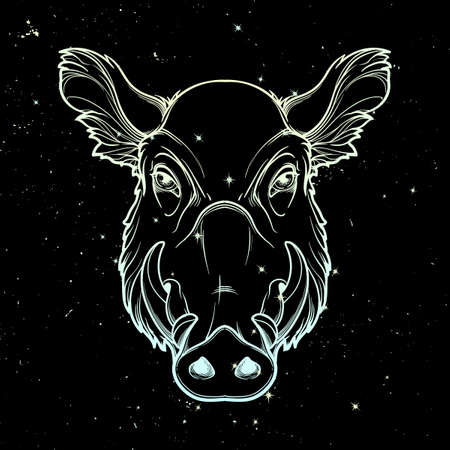 Fanged wild boars head. Mascot of the New Year 2019 according to Chinese zodiac calendar. Linear drawing isolated on black starry night textured background. EPS10 vector illustration