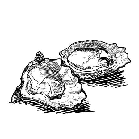 Still life drawing witha two opened oysters. Linear sketch isolated on white background. EPS10 vector illustration