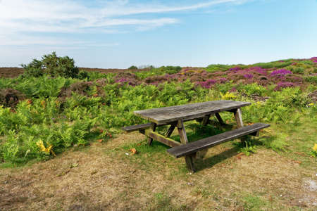 moorland: Summer landscape with moorland and a wooden picnic table
