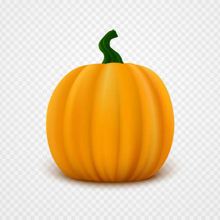 Realistic orange vector pumpkin isolated on transparent background. Single fresh vegetable close-up 矢量图像