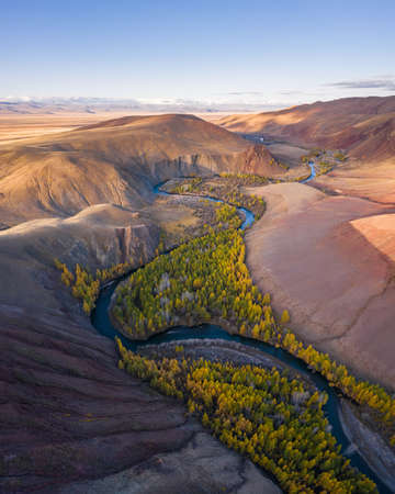 Red Hills of Clay, Mountains, Larches and Meanders of River in Autumn. Aerial View. Kokorya. The Altai Mountains, Russia.