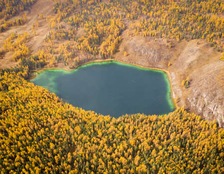 Lake Uchkel and Yellow Larch Forest in Autumn. Aerial View. Ulagan Plateau. Altai, Russia. Archivio Fotografico