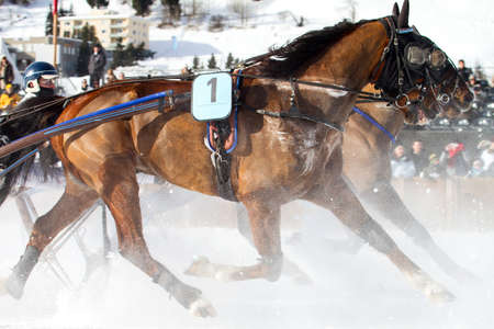 famous Horse show - Engadine - Switzerland Archivio Fotografico