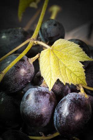 black grape with leaf - still life