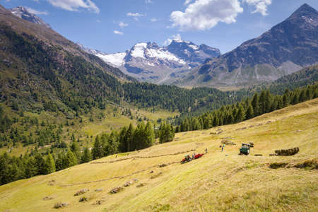 Val Viola - Bormio (IT) - harvest of hay in the mountains