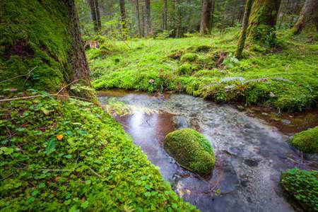 lush undergrowth with stream - nature