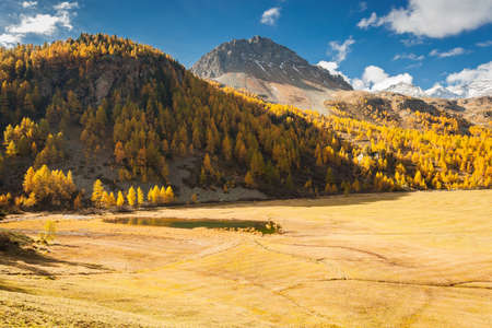 alpine landscape with golden larches