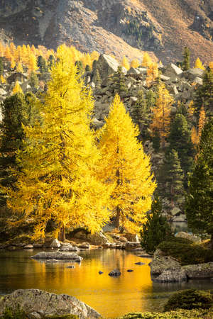 Alpine lake with larches in the fall
