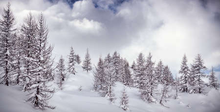 winter landscape with fresh snow Stock Photo