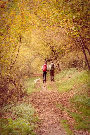 autumn walk in the woods Stockfoto