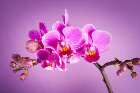 purple orchid flowers - still life Stockfoto