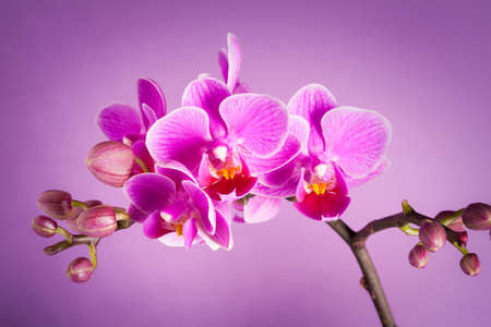 purple orchid flowers - still life
