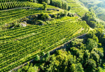 Valtellina vineyards (IT) - Tresenda area - Aerial view Standard-Bild